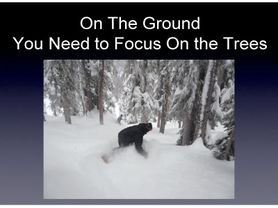 Slide 20. On The Ground You Need to Focus On the Trees